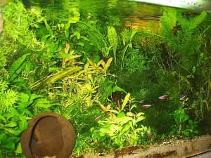 Akwarium roślinne low tech