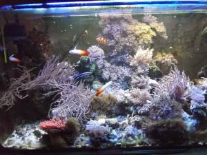 morskie