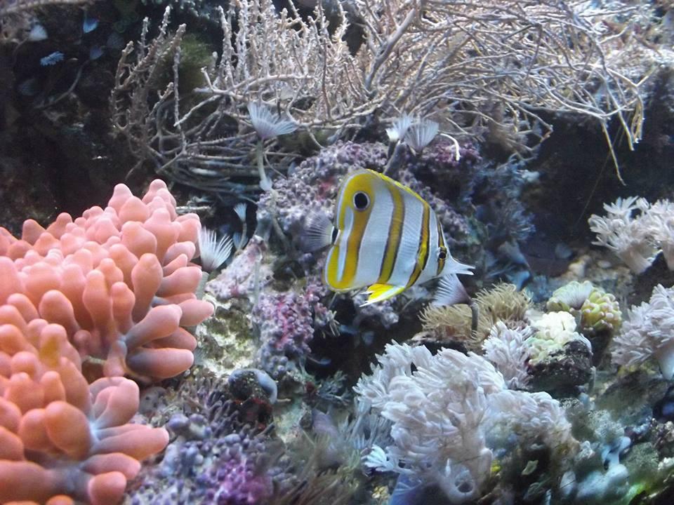 Moje dawne akwarium morskie
