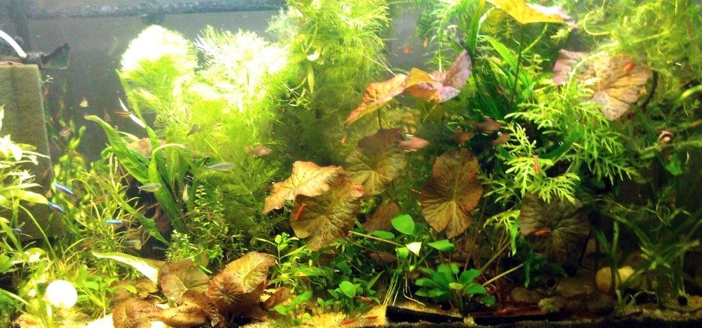Aktualny wygląd mojego akwarium.
